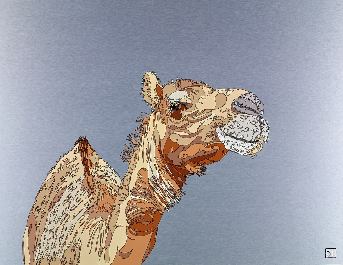 Camel by dylan izaak -  sized 36x28 inches. Available from Whitewall Galleries
